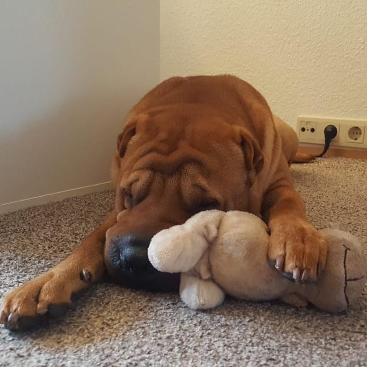 Bürohund Bruno